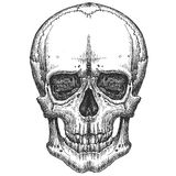 Human skull on a white background. sketch Stock Image