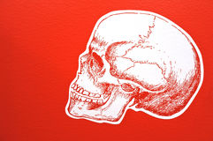 Human skull. White Human skull isolated on red background. Danger concept copy space stock images