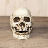 Human skull on wood Stock Photos