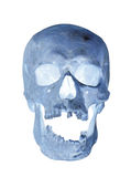 Human skull x-ray Stock Photos