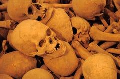 Human skulls Stock Photo