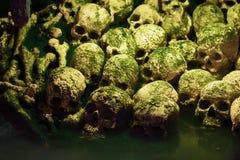 Human skulls Royalty Free Stock Photos