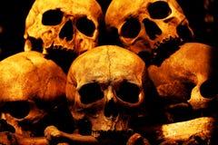 Free Human Skulls Stock Photography - 17736972