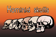 Human skulls Royalty Free Stock Photos