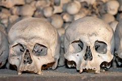 Human Skulls Royalty Free Stock Photo