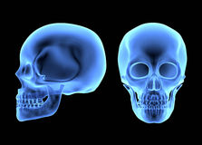 Human Skulls. Isolated on black. X-ray effect stock illustration