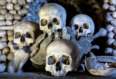 Human skulls Royalty Free Stock Images
