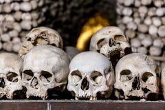 Human skulls Royalty Free Stock Image