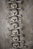 Human skulls with bones. Stacked in a row Royalty Free Stock Image