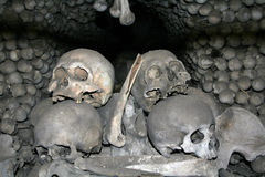 Human skulls and bones 2. Bones of victims of black death Royalty Free Stock Image
