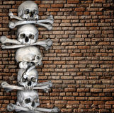 Human skulls and bones Stock Image