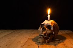 Human skulls lay on wooden floor and black background.  Royalty Free Stock Photography