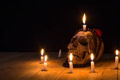 Human skulls lay on wooden floor and black background.  Royalty Free Stock Images