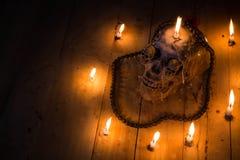Human skulls lay on wooden floor and black background.  Stock Photos