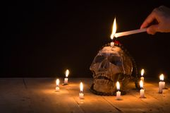 Human skulls lay on wooden floor and black background.  Stock Photography