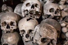 Human Skulls Royalty Free Stock Images