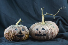 Human skulls and pumpkin on black background, Halloween day background Stock Image