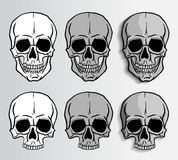 Human Skulls vector set Royalty Free Stock Photography