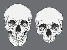 Human skulls set  vector illustration Royalty Free Stock Photography