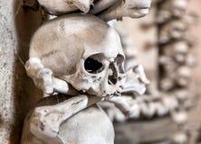 Human skulls Stock Images