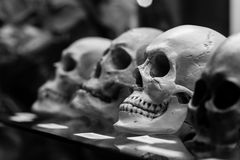Human skulls standing on the glass shelf. Black and white photo Royalty Free Stock Photos