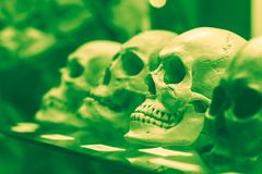 Human skulls standing on the glass shelf. Black and white toned to chloride colors photo Stock Image