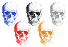 Human skulls, vector set Stock Photo