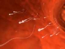Human sperm Royalty Free Stock Photos