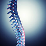 Human spinal bone 3d Royalty Free Stock Photos