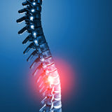 Human spinal bone 3d Stock Photo
