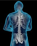 Human Spine. High Quality 3D rendering of Human Spine and Back Stock Photography