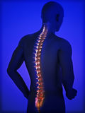 Human spine. Concept with blue gradient background Stock Photography