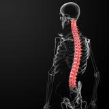 Human spine. 3d render human spine - back view Stock Image
