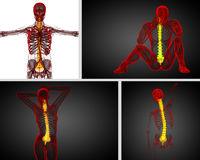Human spine Stock Images