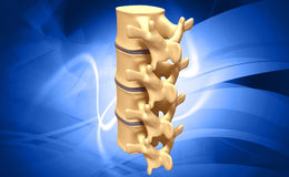 Human spine Stock Image