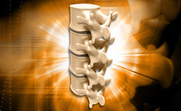 Human spine Royalty Free Stock Photography