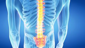 The human spine stock video footage