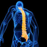 The human spine. Medical 3d illustration of the human spine Royalty Free Stock Images