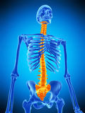 The human spine Stock Images