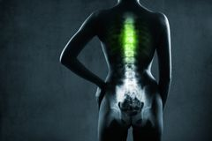 Human spine in x-ray, on gray background. The chest spine is highlighted by green colour royalty free stock image