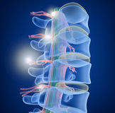 Human Spine x-ray view. 3D render Stock Photo