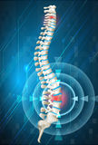 Human spine showing back pain. Illustration Royalty Free Stock Images