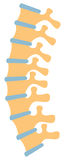 Human spine. Vector illustration,  design Stock Photography