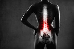 Human spine in x-ray, on gray background. Royalty Free Stock Image