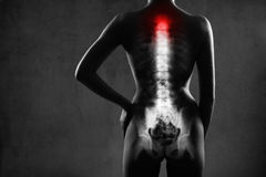 Human spine in x-ray, on gray background. Stock Image