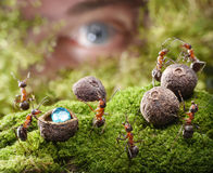 Human spying ants hide treasure, ant tales stock images