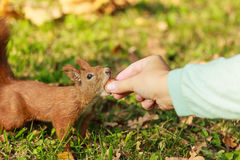 Human and squirrel. Royalty Free Stock Photography