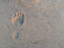 Human step on the sand Royalty Free Stock Images