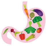 Human Stomach Anatomy with Vegetables Vector Illustration Royalty Free Stock Photography