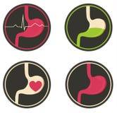Human stomach illustration Stock Image